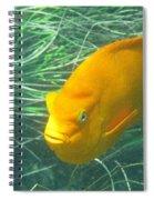 Garibali 2 Spiral Notebook