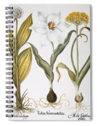 Garlic, 1613 Spiral Notebook