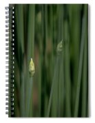 Garlic Chive Season Spiral Notebook