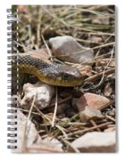 Garter Snake On The Trail In The Pike National Forest Of Colorad Spiral Notebook