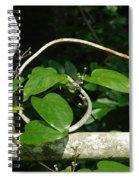 Gate And Vine Spiral Notebook