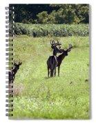 Gathering Of Bucks Spiral Notebook