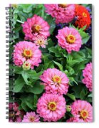 Gathering Of Pink Zinnias Spiral Notebook