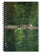Gator In The Spring Spiral Notebook