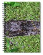 Gator Rising Spiral Notebook