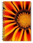 Gazania R Spiral Notebook