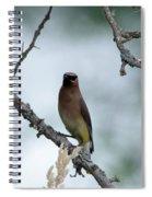 Gaze From A Cedar Wax Wing Spiral Notebook