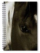 Gaze  Spiral Notebook