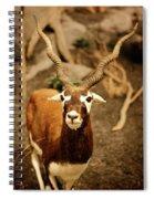 Gazelle Spiral Notebook