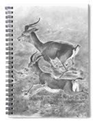 Gazelles Spiral Notebook