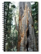 General Grant Grove Sequoia Spiral Notebook