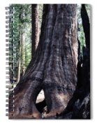 General Grant Grove Sequoia Window Spiral Notebook