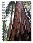 General Grant Grove Streaming Light Spiral Notebook