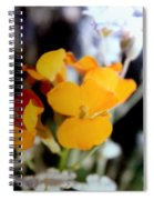 Gentle Yellow And White Spiral Notebook