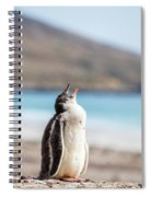 Gentoo Penguin Calling For Mother On Shingle Spiral Notebook