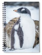 Gentoo Penguin With Turned Head On Snow Spiral Notebook
