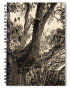 Georgia Live Oaks And Spanish Moss In Sepia Spiral Notebook