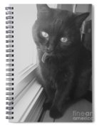 Gepetto The Cat  Spiral Notebook