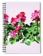 Geraniums In A Row Spiral Notebook
