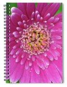 Gerber Daisy - Sweet Memories 01 Spiral Notebook