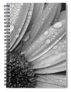 Gerbera Daisy After The Rain 2 Spiral Notebook
