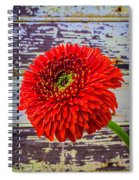Gerbera Daisy Against Old Wall Spiral Notebook