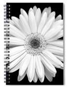 Single Gerbera Daisy Spiral Notebook