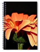 Gerbera Daisy On Black Spiral Notebook