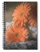 Gerbera Daisy Trio Spiral Notebook