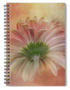 Gerbera From The Back Spiral Notebook