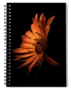 Gerbera Set On Black Spiral Notebook