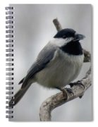Getting Ready To Crack - Black-capped Chickadee Spiral Notebook