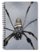 Getting To Know A Golden Orb Weaver Spiral Notebook