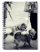 Getting To Know You - Puppies On Parade Spiral Notebook