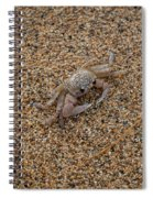 Ghost Crab Spiral Notebook