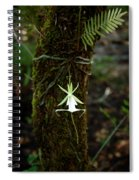 Ghost Orchid Of The Fakahatchee Strand Spiral Notebook