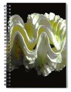 Giant Frilled Clam Seashell Tridacna Squamosa Spiral Notebook