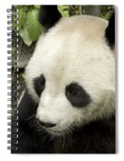 Giant Panda At Rest Spiral Notebook