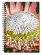 Giant Pink King Protea Flower Spiral Notebook