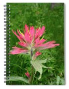 Giant Red Paintbrush Spiral Notebook
