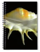 Giant Spider Conch Seashell Lambis Truncata Spiral Notebook
