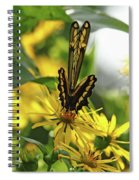 Giant Swallowtail Wings Folded Spiral Notebook