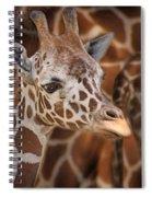Giraffe - Camouflage Spiral Notebook