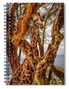 Giraffe Camouflage Spiral Notebook