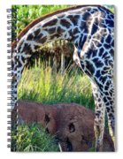 Giraffe Feasting Spiral Notebook