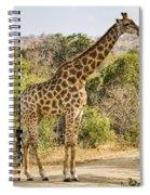 Giraffe Grazing Spiral Notebook