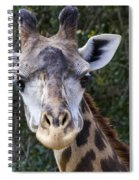 Giraffe Looking At You Spiral Notebook