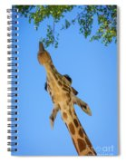Giraffe Lunch Spiral Notebook