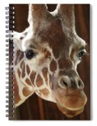Giraffe Taking A Peek Spiral Notebook
