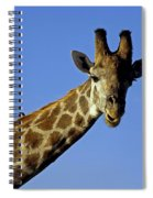 Giraffe With Oxpeckers Spiral Notebook